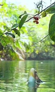 吃水果,补维C @西红柿就是番茄/摄影打卡/我爱大自然/动物世界#十一月打卡挑战 #精彩录屏赛 #又嗨又野在玩乐 #2020巅峰之战