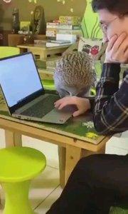 猫头鹰:我要看米老鼠和唐老鸭 @每日沙雕/宠物搞笑视频/家有萌宠#又嗨又野在玩乐 #搞笑是刚需
