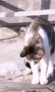 守洞待鼠 @小程哥#高手/喵星人/宠物猫#十二月打卡赛 #又嗨又野在玩乐 #会点儿才艺了不起