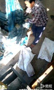 塑料布,编织袋,吨包袋,辫子料撕碎机