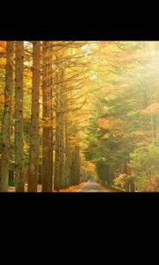 秋天的到来,夏天成了故事