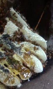 朋友们,你们说这种蜂蜜怎么样?在评论区告诉我,喜欢户外的朋友可以关注一下我!