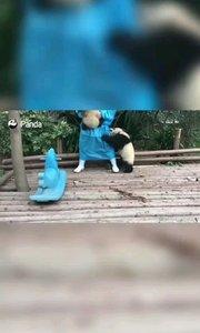 我是不是你最爱的熊,你为什么不说话?#搞笑不要停