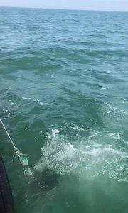 六十里海参捕捞员捕捞海参上岸了