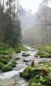 雨后张家界景区金边溪!关注主播哦!