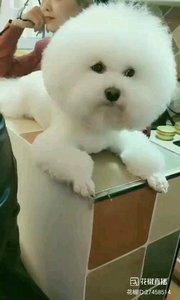 看面包狗狗可爱吗?