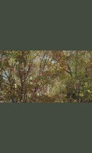 秋分# 半窗一几,远兴闲思,天地何其寥阔也;清晨端起,亭午高眠,胸襟何其洗涤也。