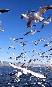 问一声那海鸥,你飞来飞去有何求?