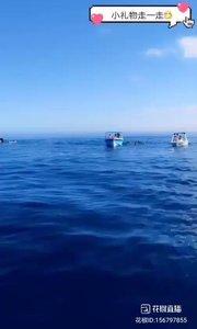 @毛里求斯黑妹儿(156797855)在远处的还没上有大海豚出没,船上的人跳进水里追逐着海豚??