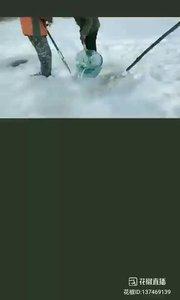#花椒星闻 #冰雪奇缘 #户外动起来 #zifeng @zi,feng户外  @zi,feng户外 今天带大家继续江上起网,近距离接触白皑皑的雪跟厚厚的冰。一行四人,两位起网一人直播,一人同宝宝们一同欣赏鱼。一起看起网!@花椒热点  没有看@zi,feng户外 直播,真的不知道这么厚的冰需要破冰冰凿打开冰层,用网鱼兜把碎冰捞走,然后下上网,把网抻到水底,绑上长长的木棍插到水底。起网基本也是这样,破冰洞捞碎冰,拉网,网呢? 网由于鱼的数量或者水流速度都有可能脱离木棍,捞网更是麻烦,天冷的冻手,严寒下操作实属