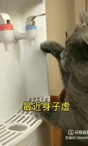 #花椒星闻 @花椒热点  @【情王殿】   东 北 靓 猫 ? 家萌宠不耍宝,@【情王殿】   东 北 靓 猫 ? 就不叫靓猫! 每个月都有那么几天,身子虚,来喝点热水,咋没水啦?!不应该啊,啥情况这是?以前一遍就稳出呀!坏啦?味道正常啊!呀,不能碰,烫!我还就不信了!今天,再不出我急啦!你给我等着,我qiu东西去! 这就应了那句话,什么样的主子什么样的奴才,什么样的主人养什么样的宠猫啊!搞笑不要停,继续分享行不行?行!@【情王殿】   东 北 靓 猫 ? 感谢娱乐段子  41报道   @【情王殿】