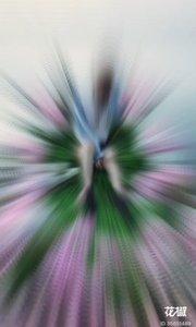 千岛湖中的花花船