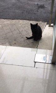 黑猫警长已成功被我吓走~所以,明天直播时间晚6-8点,欢迎新老朋友前来视察!