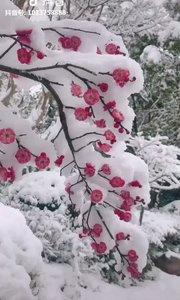 雪因梅透露春的信息,梅因雪显出高尚的品格,梅须逊雪三分白,雪却输梅一段香,生活亦是如此,2019加油❤❤