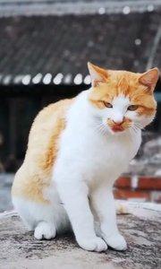 一看这猫星人的抓鱼手法,就知道是惯犯了,哈哈!大吉大利,今晚吃鱼???