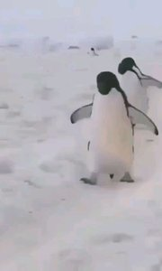 ?温馨提示❤️ 雪天出门,防止滑倒,手别揣兜里! 告诉大家走路的正确姿势 这么走 这么走 稳当!#降温了宝贝们