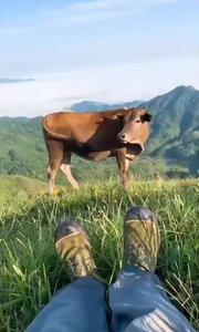 人生已經到達了巔峰,終于過上了放牛的生活了,放一頭正好#戶外動起來