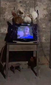 待着没事,看会电视