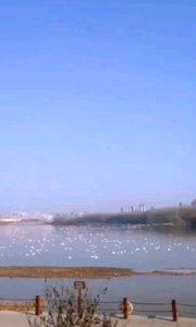 天鹅#天鹅湖湿地公园