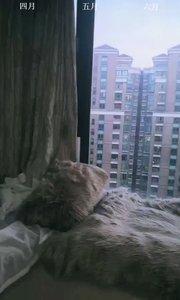 #我家阳台 #原创达人 哈哈,想不想来我家阳台拔点小葱?