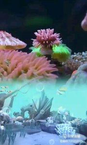 原来海底世界也可以这么美