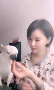 #主播的高光时刻  @花筱熙 宠物鹦鹉的日常,不止要给主人剥开心果吃,还要剥大蒜,心疼鹦鹉遇到这么一个压榨宠物的主人