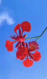 每一个平淡的日子都值得尊重,每一个还在身边的人都应该珍惜,愿你眼里有星辰,身边有微风,心中有暖阳。