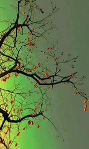 """秋去冬来万物休,唯有柿树挂灯笼,祝大家""""柿柿顺心""""!"""
