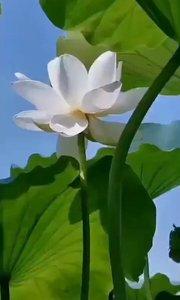 来生愿做一朵莲,静静盛开在心间,出淤泥不染,倚清风而眠,花开不语,花落无言……