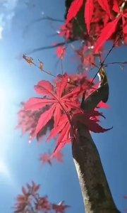 今日1時2O分 我們迎來霜降節! 再見!秋天!冬天,你好!  一季風景一季人,一段路上一段情。冬天伊始,請把你的腳步走的再堅定一些!