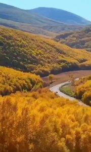 金色的秋天來了,天空像一塊覆蓋大地的藍寶石,它已經被秋風抹拭得非常潔凈而美麗。