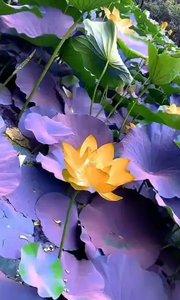 美,从来都不是小心谨慎 只有爱着,花儿才会展露岀特有的幽香?