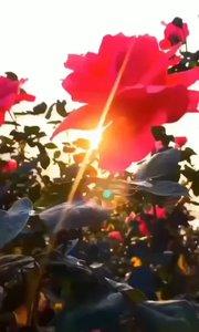 旭日朝霞雪后天,  京城抗疫写新篇。  大年不忘冠魔险,  正月宣传保健先。  户户知情医护问,  人人守责法规研。  出门口罩居家净,  万众同心解倒悬。 中国!一定胜利!