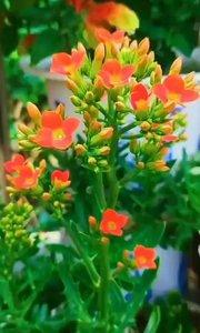 ~ 有的花,需要漫长的等待才会绽放, 花都有自己的花期,人也如此……