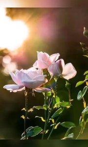 走自己的路,看自己的风景, 因为善良,所以宽容。 因为责任,所以承担。 因为乐观向上,所以我们静享生活。