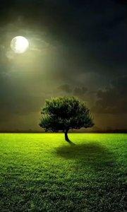 做人如树, 活出自己的精彩,不依靠谁;  活出自己的性格,不模仿谁;  活出自己的坦荡,不嘲笑谁。 做人如树,顶天立地;  做人如树,正直无私;  做人如树,坚强无比!