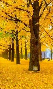 秋天,有人会赞,有人会叹, 赞者说果实累累,叹者会说前景凄凉。 其实,都与季节无关,只与心情有染。