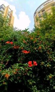 ?桂花      最朴实典雅的花      秋天的一阵微风吹过      空气里全是甜蜜的幽香~      抬头轻闭双眼      脑海里全是美好的一切[玫瑰]