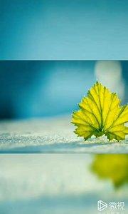 ?️生命就是一个绣花。 我们从底下看,乱七八糟的走线, 上帝从上方看,则是一朵花。愿你这朵生命之花时刻绚烂夺目。早安,朋友?
