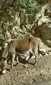 可爱的小毛驴#又嗨又野在玩乐