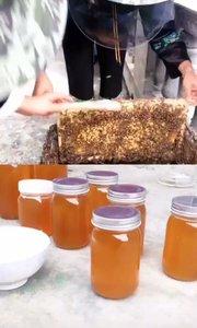 需要土蜂蜜的,请找一只温柔蜜???