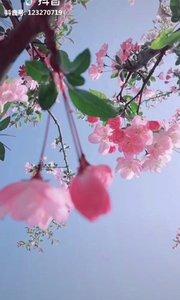 好美的花????,看了让人心情舒畅?