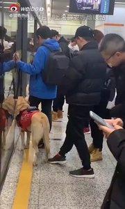 不抚摸 不投喂 不呼唤  不拒绝  四 不  一问  看到携带导盲犬的朋友时 上前问一下是否需要帮助#猛男必看 @花椒热点
