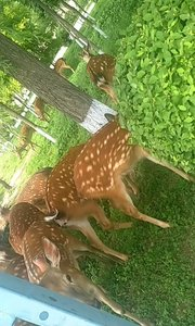 #户外动起来 @花椒热点 @花椒动态 ?遛遛鹿,看看景,带着花椒走一走。