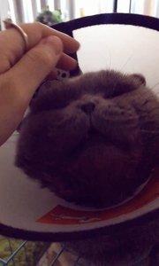 喵喵喵,晚安啦