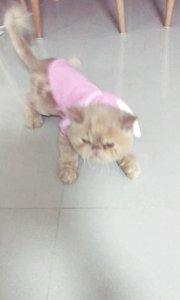 一屋子的猫