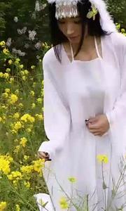是谁在油菜花田招蜂引蝶?