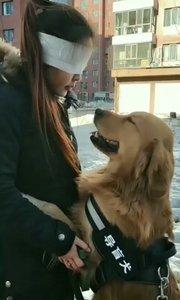导盲犬的故事!