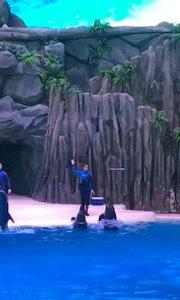 珠海长隆海洋王国续集4:海豚精彩表演