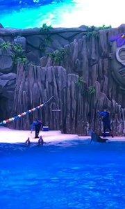 珠海长隆海洋王国续集5:海豚棒棒哒,么么哒~(^з^)-☆
